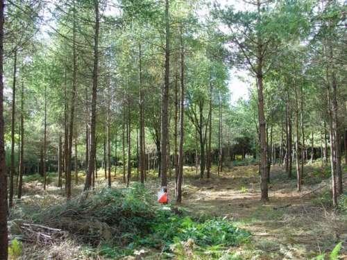 Sunny Rivers Wood