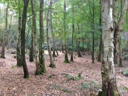 Tilgate Woods