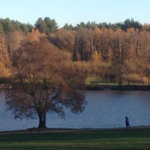 Tilgate Lake View