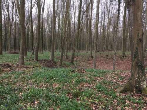 Semi-mature runnable beech forest