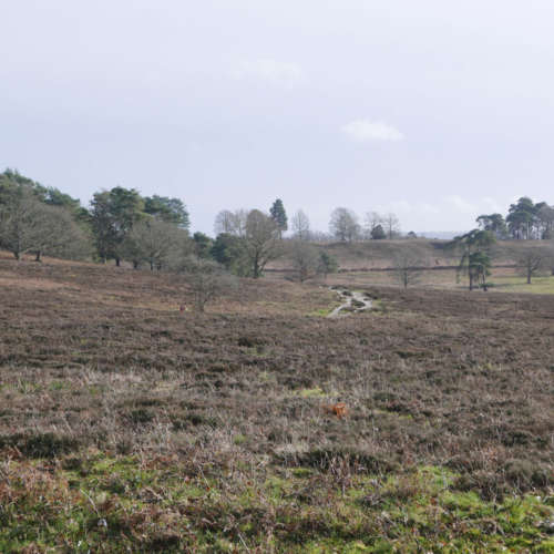Lords Piece - Sussex heathland at it's most scenic?